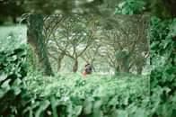 """Bild könnte enthalten: Pflanze, Baum, Blume, im Freien und Natur, Text """"ommy Michele ichele"""""""