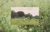 Bild könnte enthalten: Pflanze, Baum, Gras, im Freien und Natur